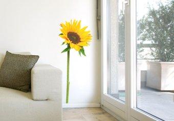 Sonnenblume-einzeln