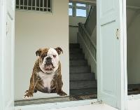 WandTattoo No.152 Wachhund