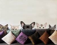 WandTattoo No.273 Katzen mit Hundeblick