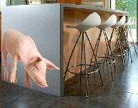WandTattoo No.279 Schüchternes Schweinchen