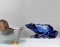WandTattoo No.281 Blue Frog