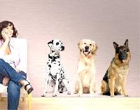 WandTattoo No.367 Dogs Set I