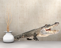 WandTattoo No.373 The Happy Crocodile