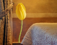WandTattoo No.SB36 Gelbe Tulpe