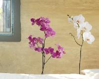 WandTattoo No.SB61 Orchidee Set III