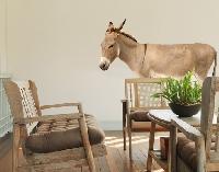 Wandtattoo No.351 Esel
