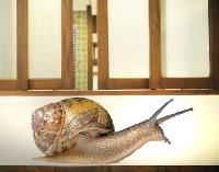 Wandtattoo No.362 Racing Snail