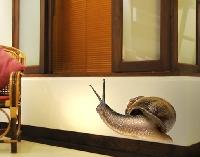 Wandtattoo No.363 Curious Snail