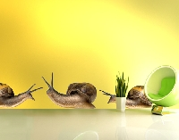 Wandtattoo No.364 Snail Family Set
